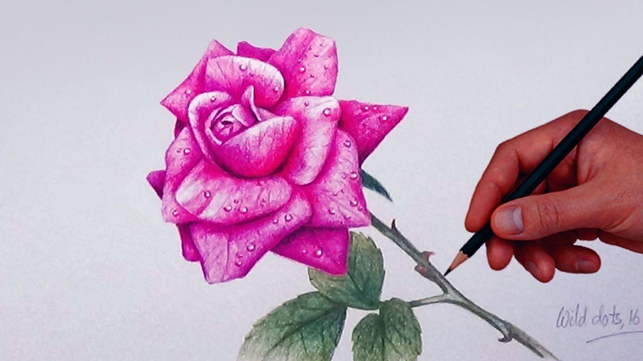 How To Draw A Rose With Simple Colored Pencils Flower Drawing Roses Drawing Colour Pencil Shading