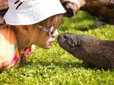 ¿Qué pasaría si lográsemos hablar con los animales?