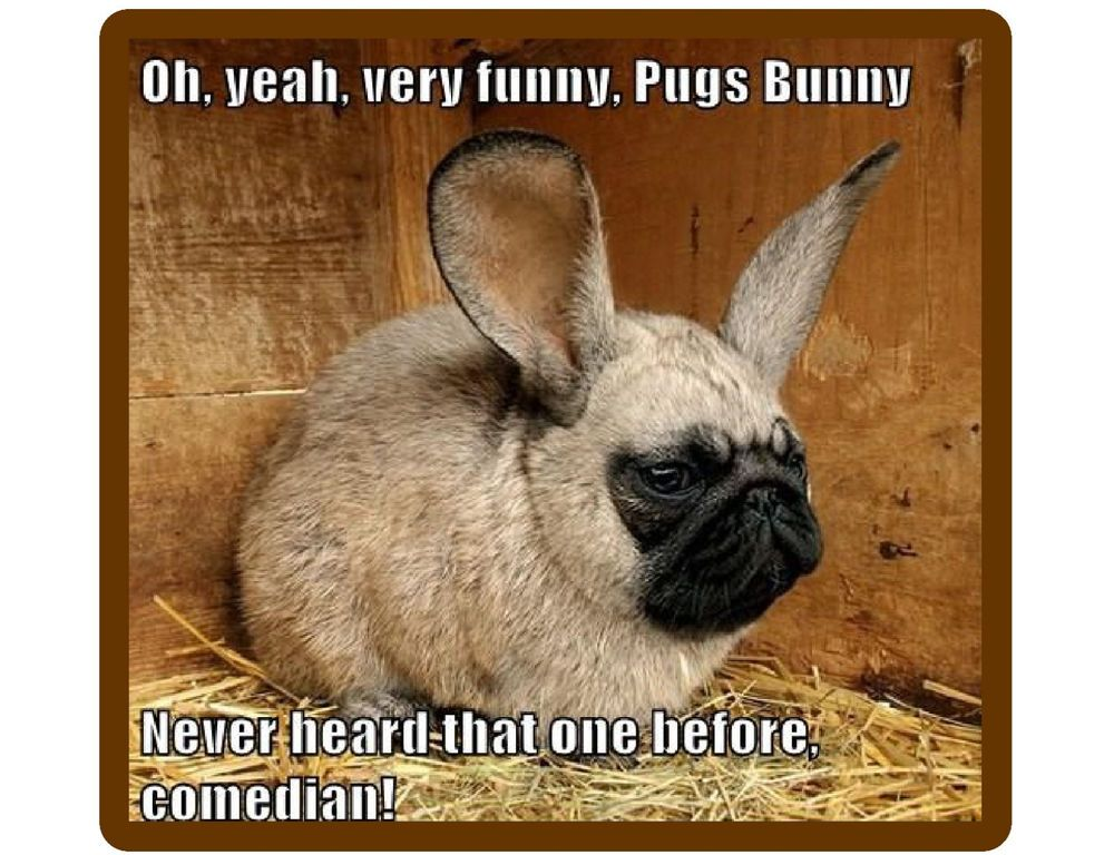 Details About Funny Dog Pug Bunny Refrigerator Tool Box Magnet