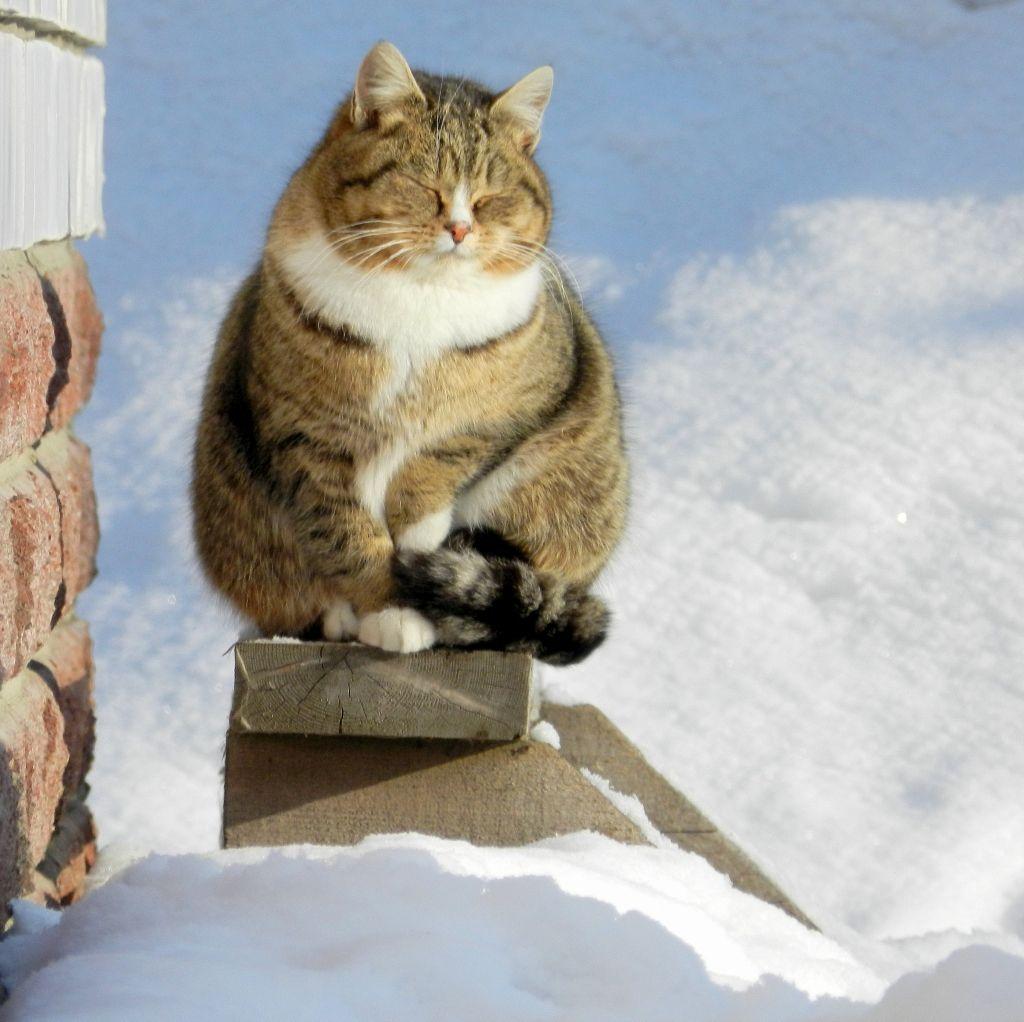 Кот К Весне Похудел. Почему кошка худеет?