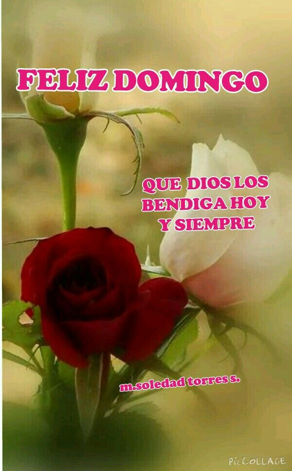 Feliz Domingo Mensajes Bonitos Pinterest Morning Flowers Love