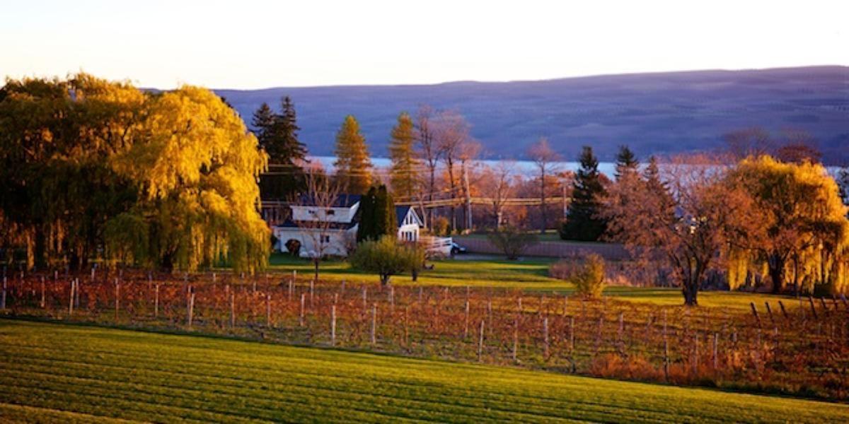 Glenora Wine Cellars Weddings