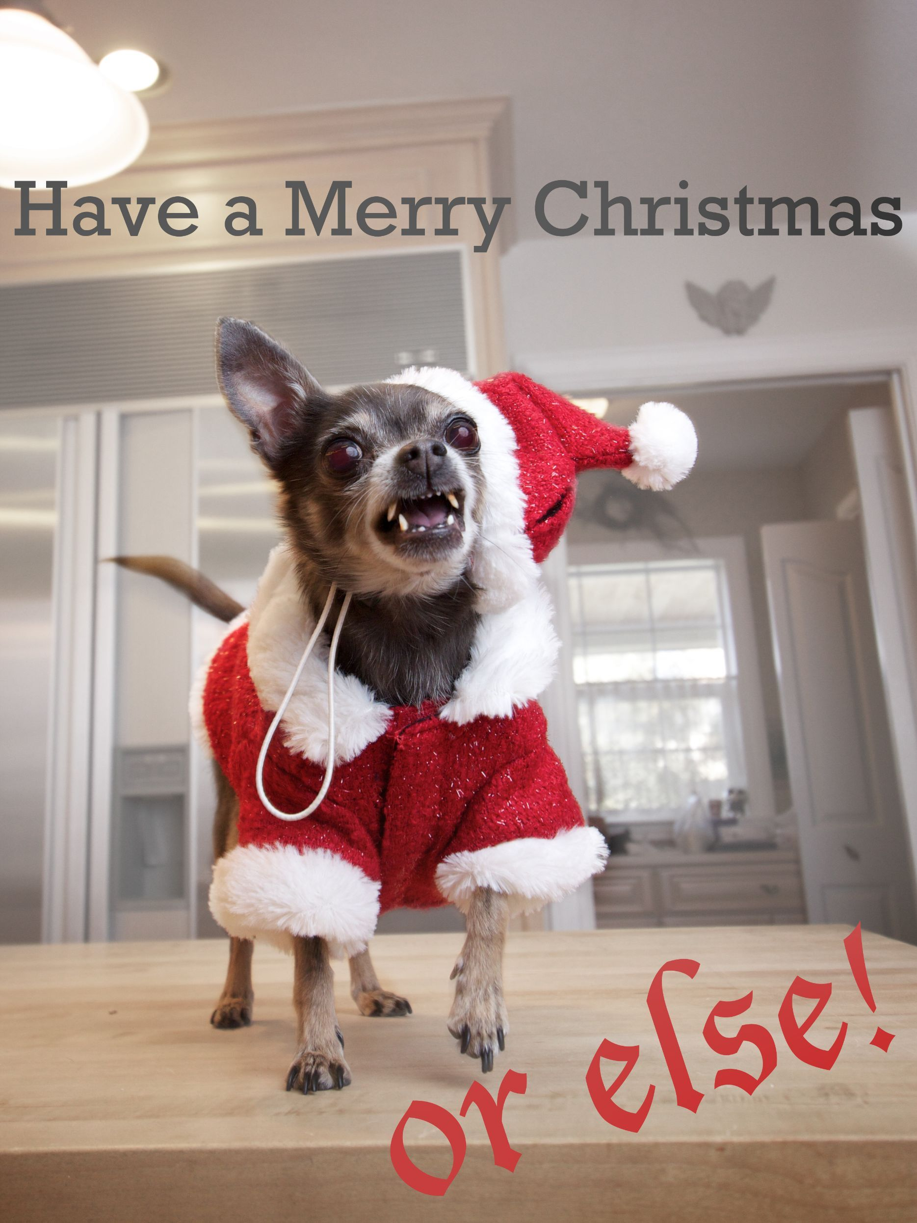 29 animals that hate Christmas more than the Grinch | FuN ...