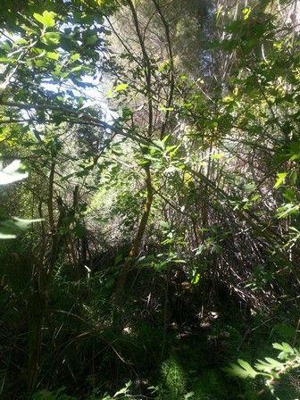 La luz en la tarde en la Reserva Natural de Corvales