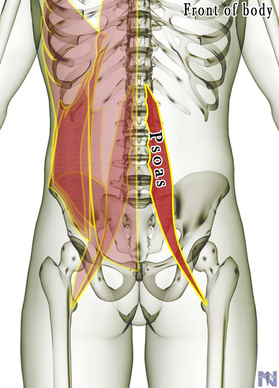 Psoas Psoas Smr Pilates Pinterest Muscles