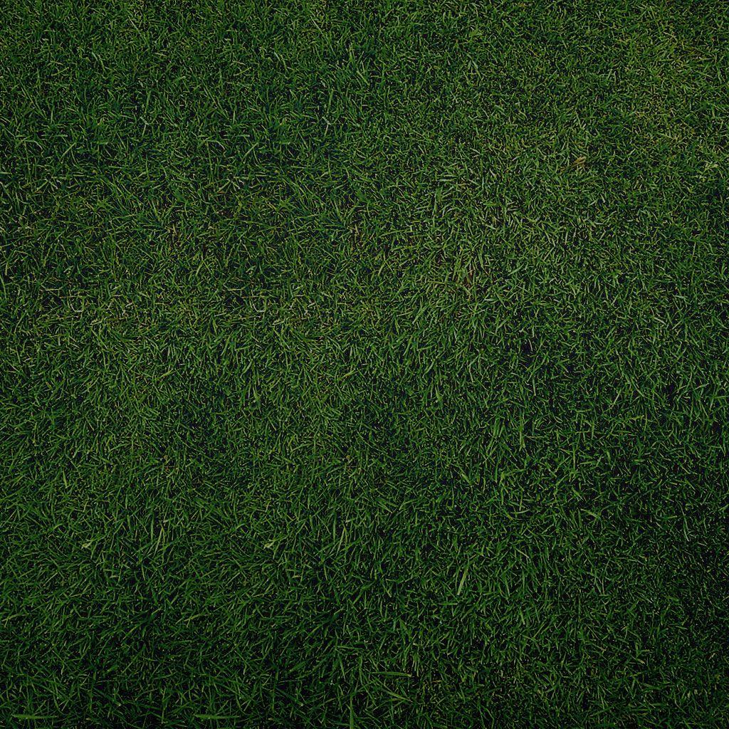 Delicieux Texture · Plain Grass
