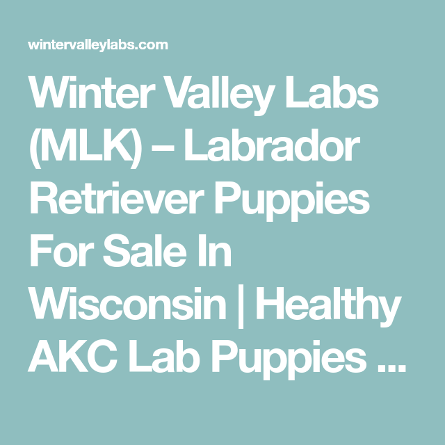 Winter Valley Labs Mlk Labrador Retriever Puppies For Sale In