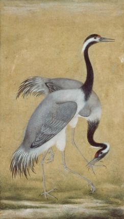 A pair of Saras birds, detail, by Ustad Mansur. Gouache and gilt on paper. India, Mughal period, 17th century.