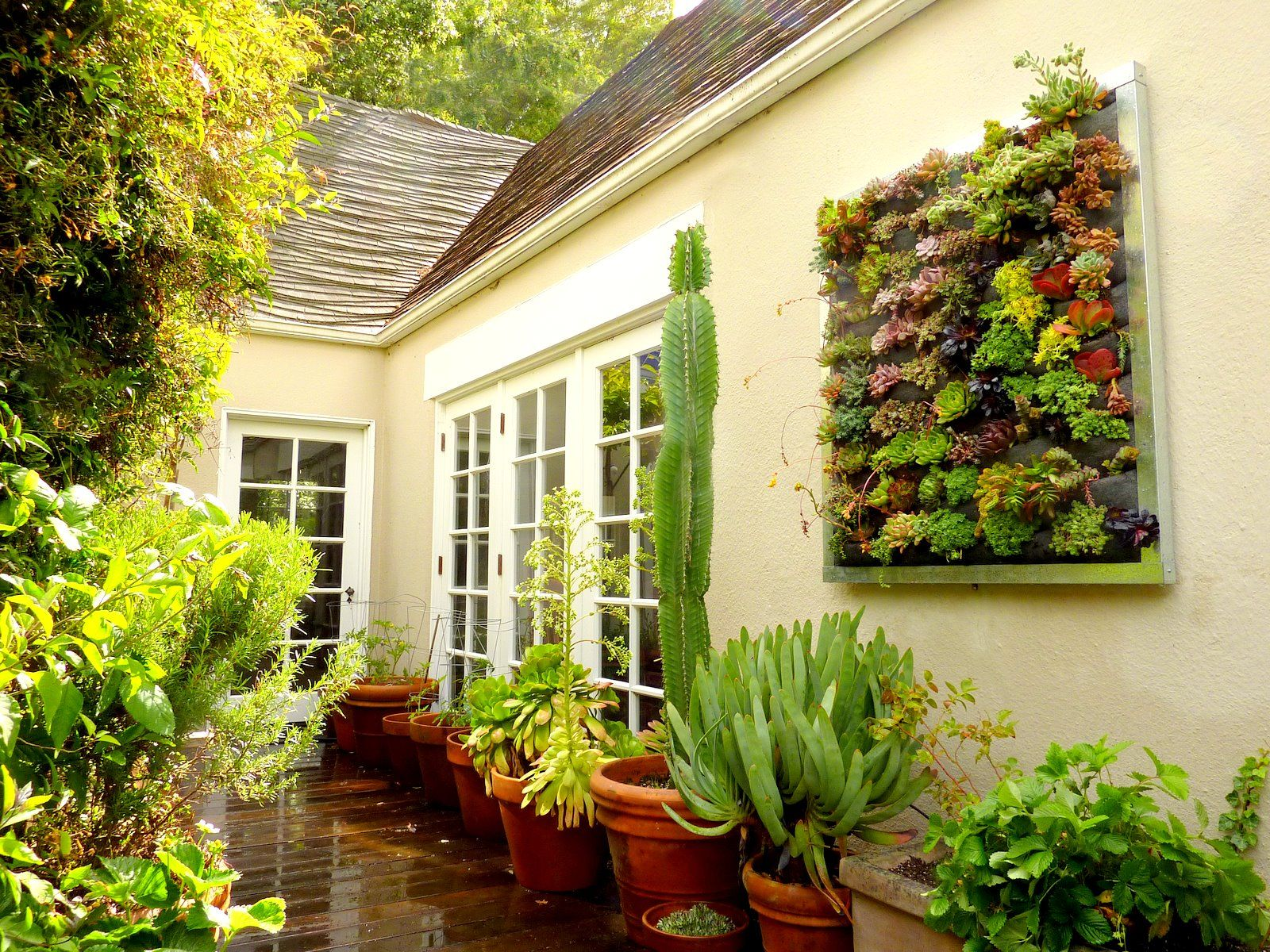 Plants On Walls Vertical Gardens: Succulent Installation - Gilman ...