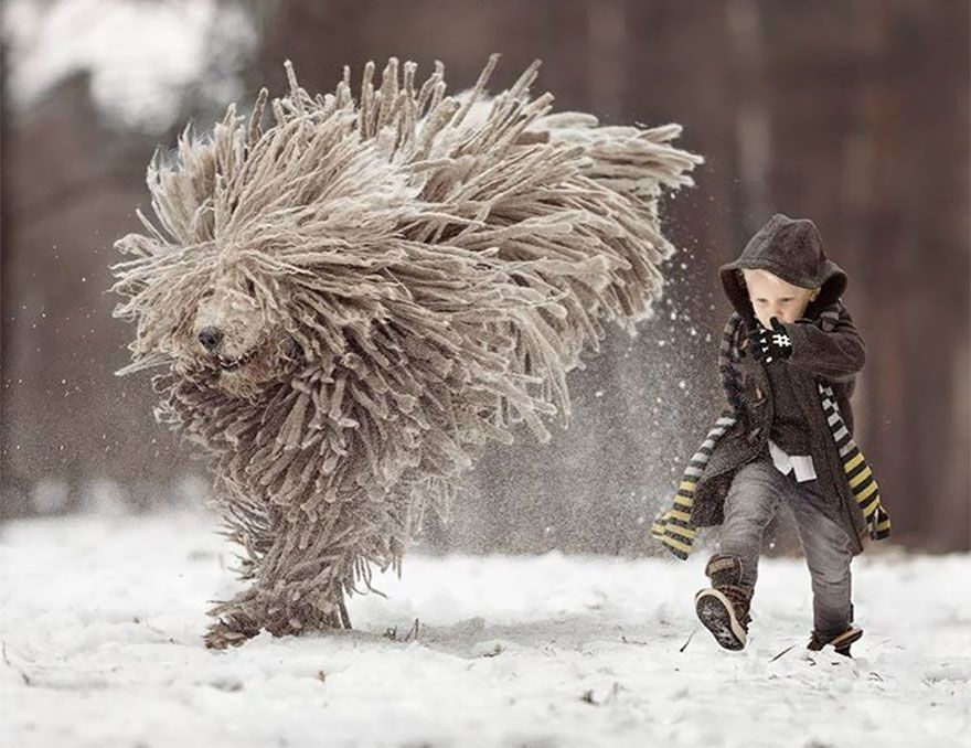 This Giant Furry Dog Playing With A Kid Will Make Your Day Dog - Tiny children and their huge dogs photographed in adorable portraits by andy seliverstoff