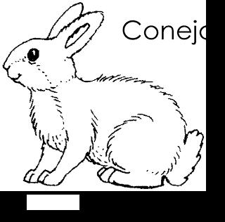 Animales Del Bosque Para Colorear Conejo Rabbit Conejo