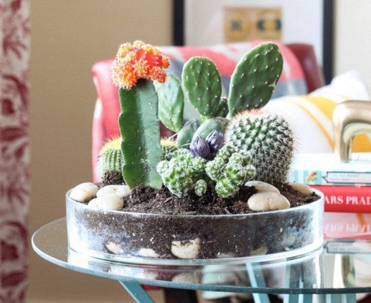 Mother's Day DIY Gift Ideas: 10 Inspiring Succulent & Cactus Gardens | Apartment Therapy