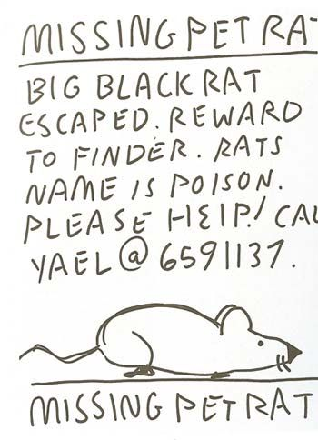 Lost Rat Lost Pinterest - lost pet poster