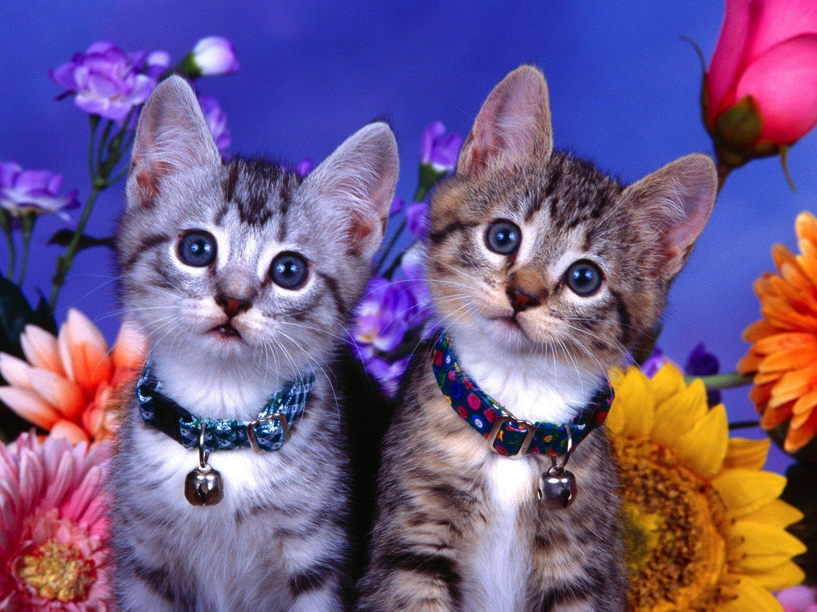 Merveilleux Free Desktop Wallpaper Cute Dragons | Cute Cat Brothers Desktop Background  FreeIn Pet Wallpaper : Cats