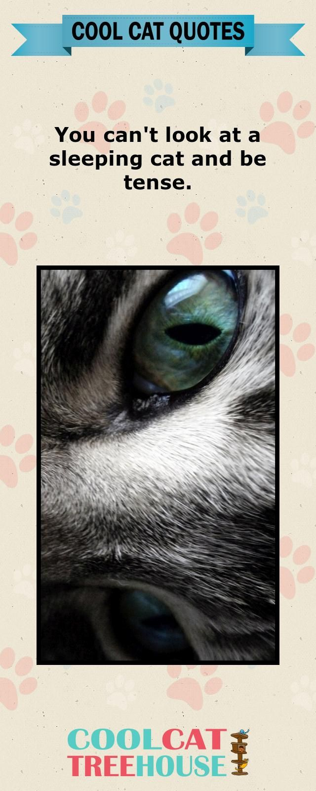 Cats are the inspiration on living a joyful life. Enjoy these words of cat wisdom.   www.coolcattreehouse.com