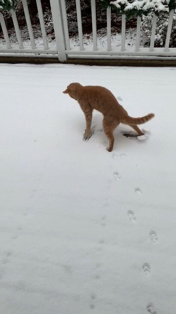#cats #funny #humor #winter #snow #booksfaithlove