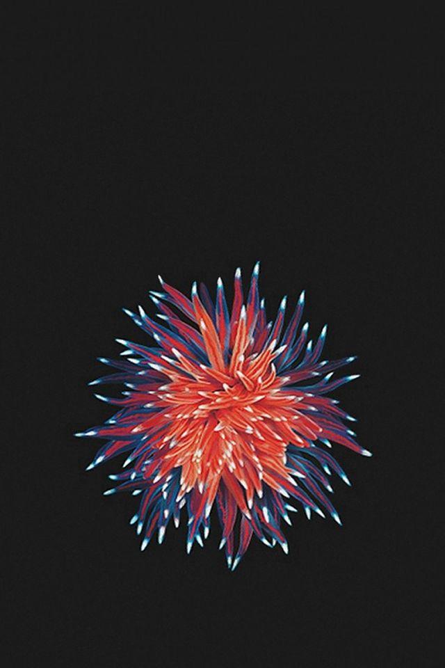 Shiny Little Flower In Dark Iphone 4s Wallpaper Iphone