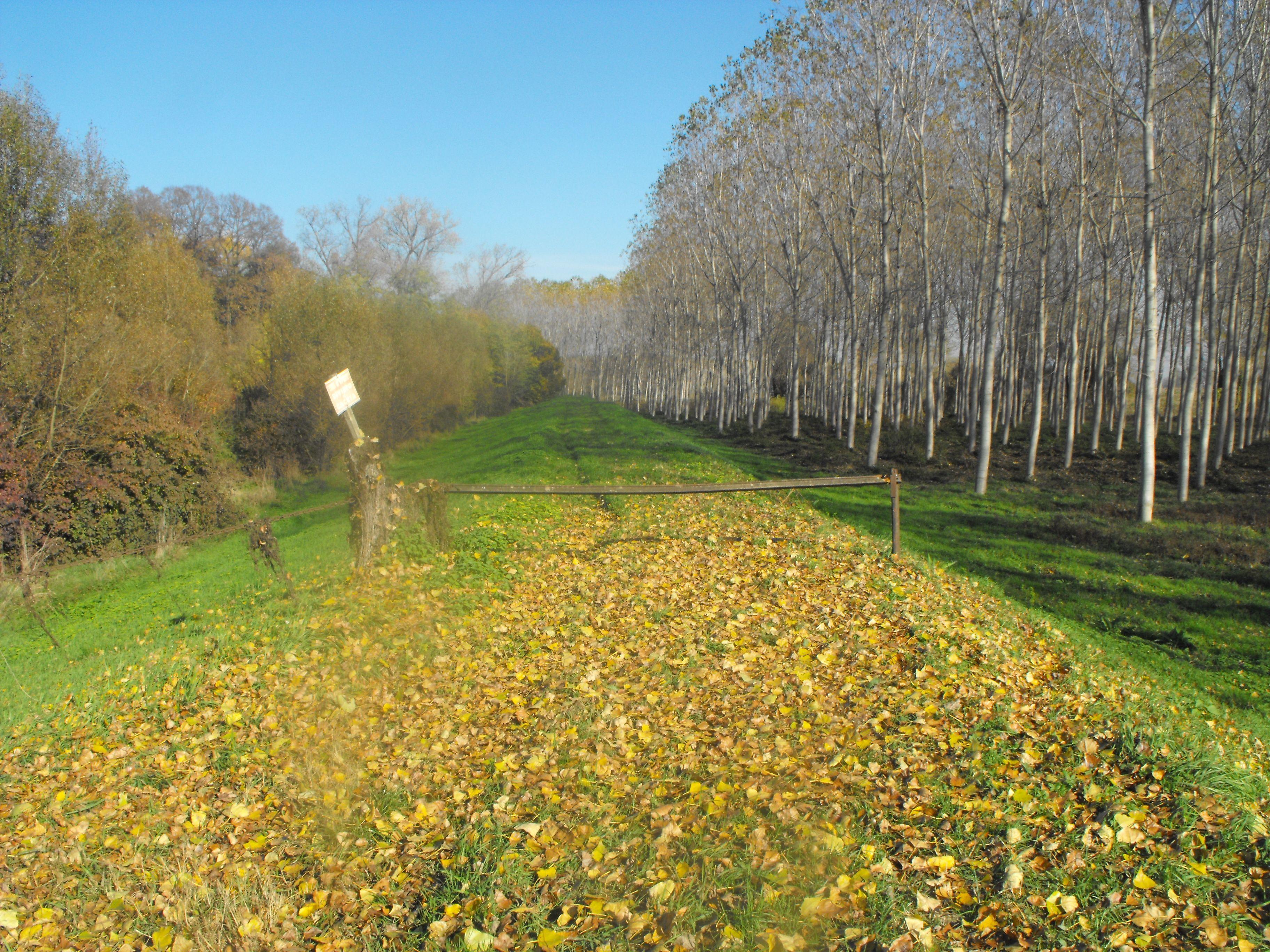 Bosco nella Golena del Po - Woods near the Po river | 30 min by bike - 60 min by foot - 10 min by car