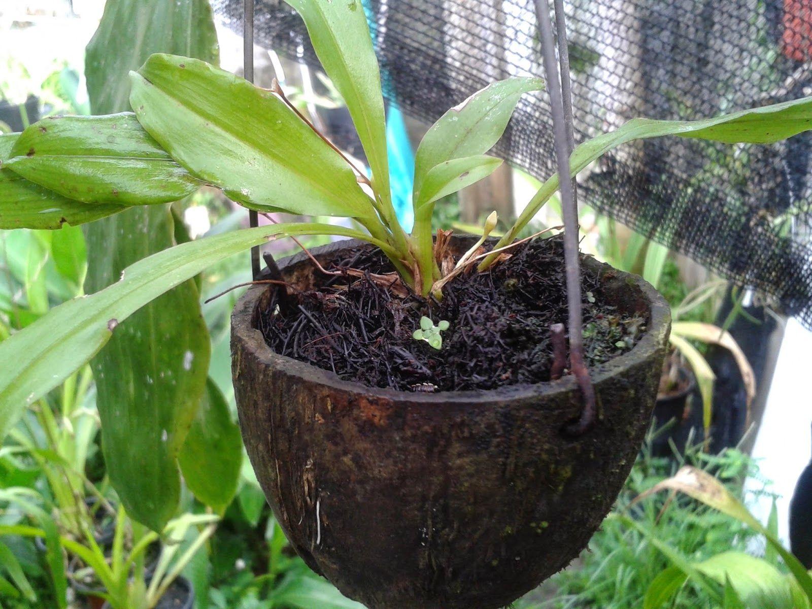 Estopa de coco para sembrar plantas colgantes buscar con - Maceta para orquidea ...