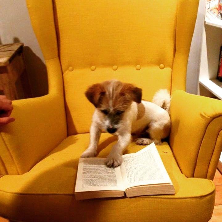 Yellow ikea strandmon chair | Westerbinnensingel iden ...