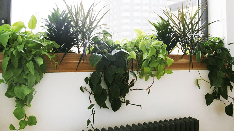 best low light office plants. The Best Low Light Plants For Your Desk Office I