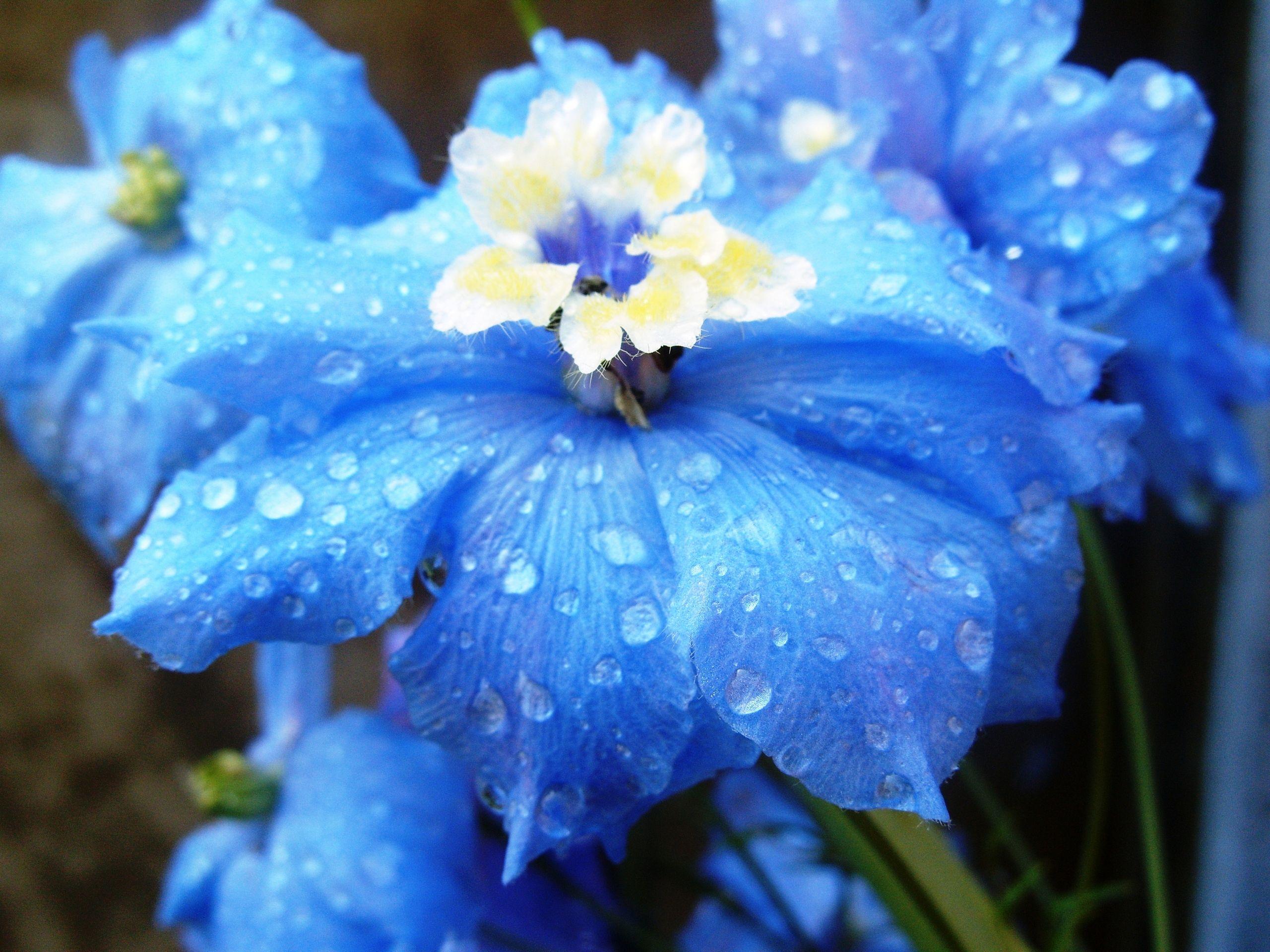 Light blue flowers das leben pinterest delphinium flowers light blue flowers izmirmasajfo