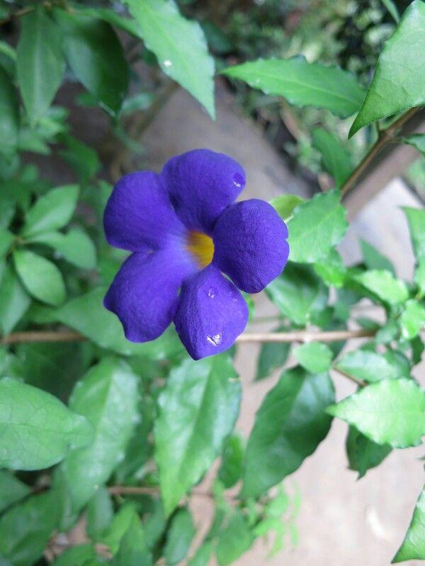 bunga loceng faizul flowers pinterest flowers
