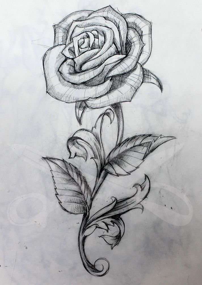 Rose and Stem | Rose drawing tattoo, Roses drawing, Flower drawing