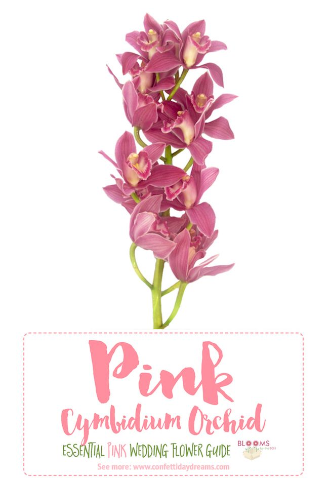 Essential pink wedding flowers guide names seasons pics flower pink flowers names httpconfettidaydreamstypes mightylinksfo
