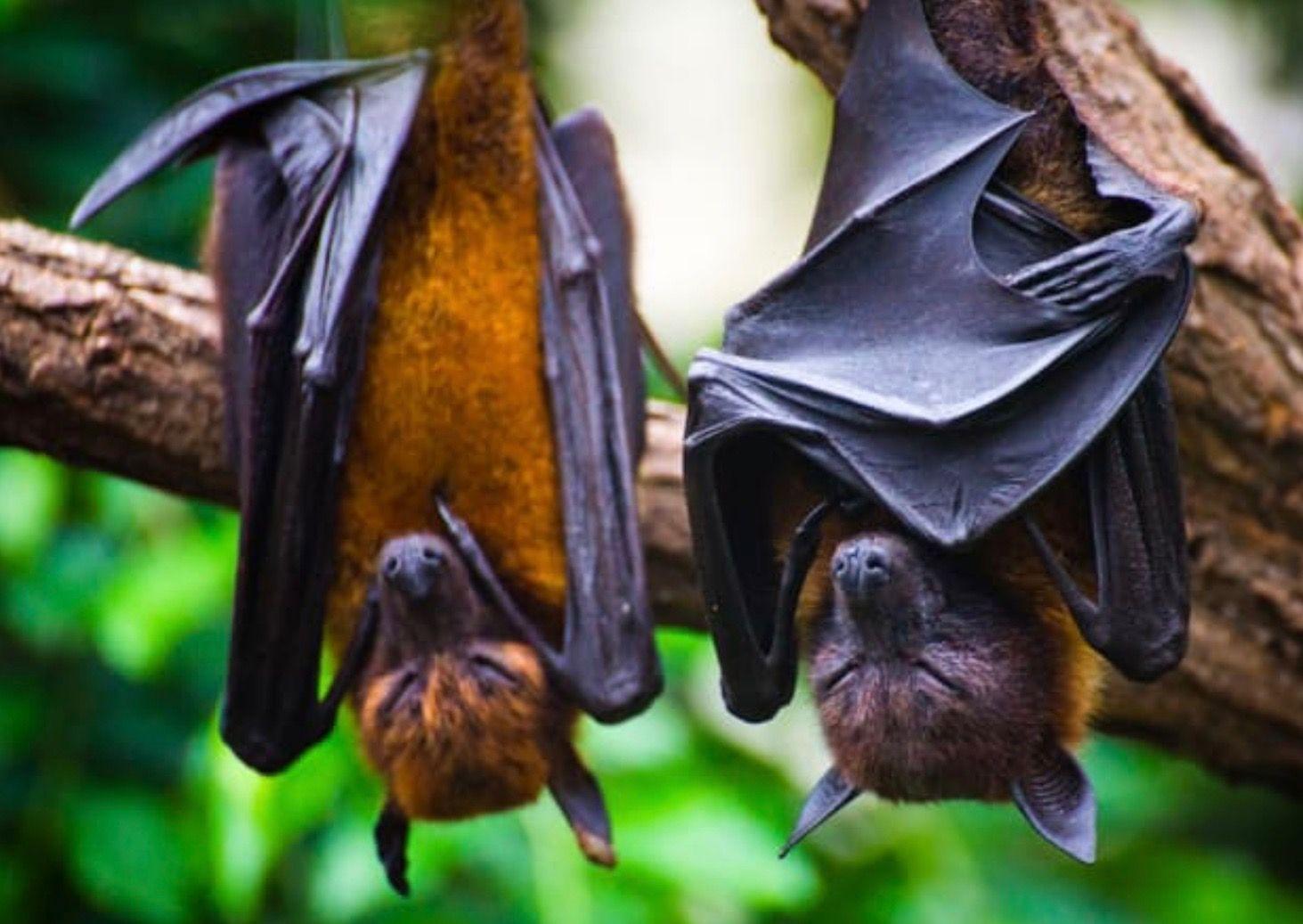 Pin on bats