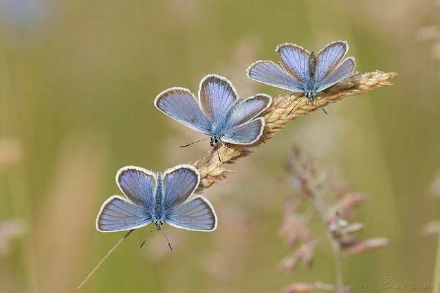 через объектив: Красивые фотографии бабочек   Размытый фон ...