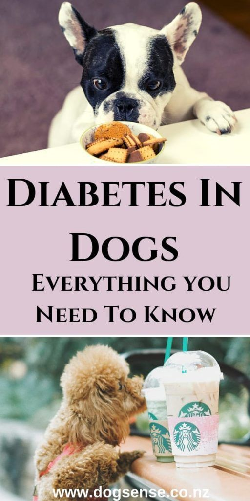 Diabetes In Dogs. How (You Can Both) Cope With It Dog