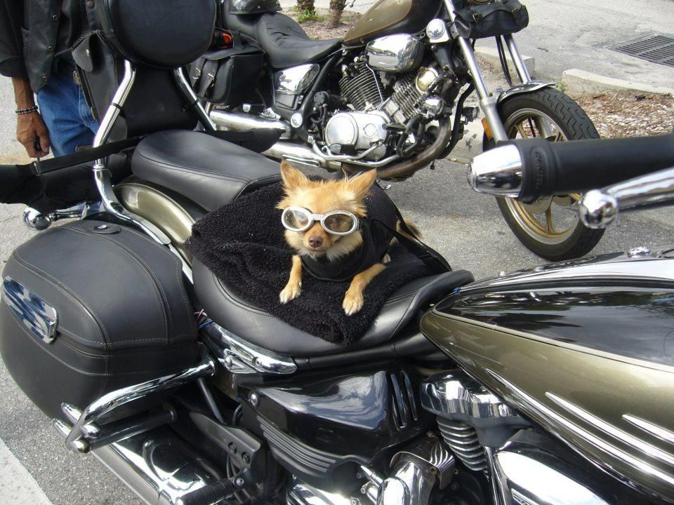 TAKE ME FOR A RIDE PLEACE.