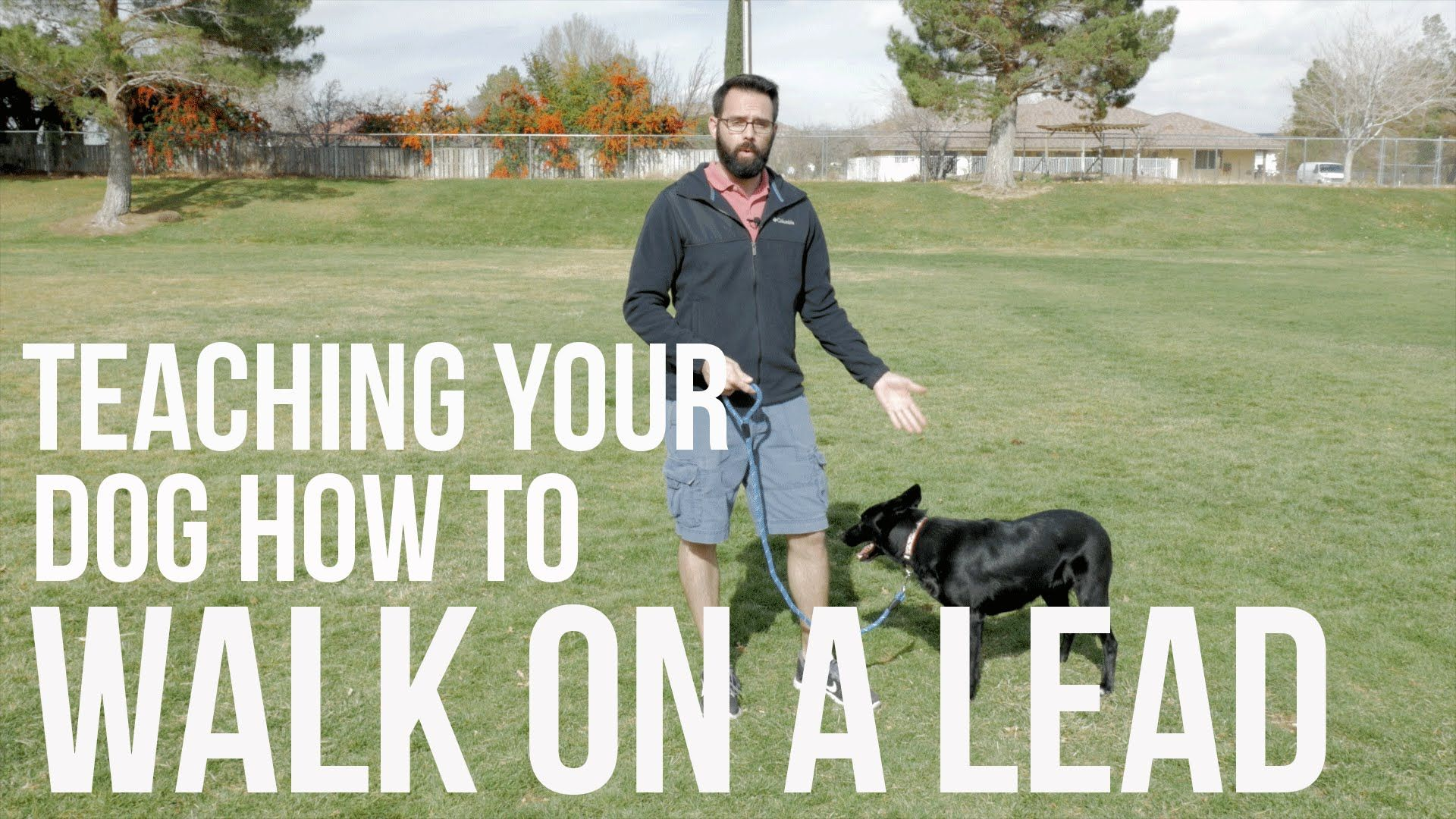 How to train your dog not to pull loose lead walking