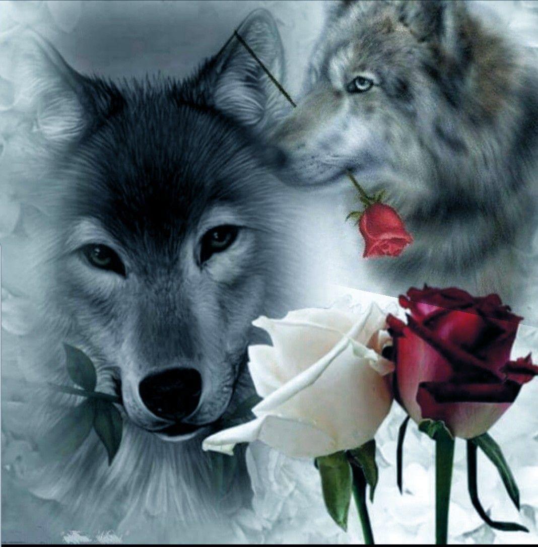 ворота, фото волк с розой в зубах выборе объектива отдайте