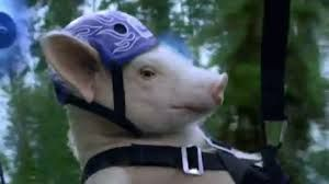 Image result for pig gif | Pig, Pig gif, Maxwell