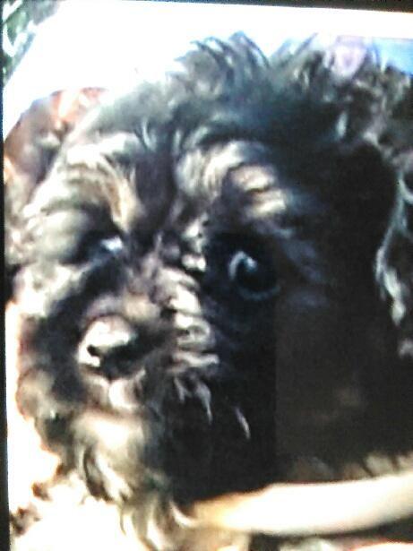 Louie DESCRIPTION Black Poodle Mix, White on his Chest Brown Paws DATE LAST SEEN October 06, 2016 AREA LAST SEEN Hartford, CT 06106 ADDRESS LAST SEEN Hamilton Street PHONE (860) 999-5347