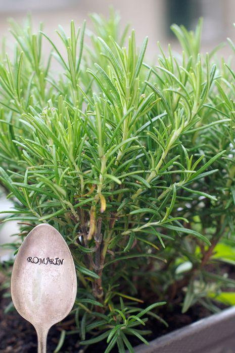 eat, little bird | My Kitchen Garden (Part 1) || Growing herbs for ...
