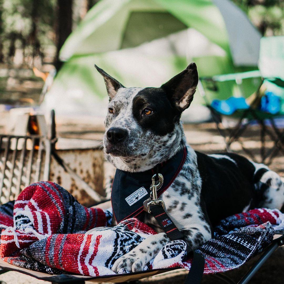 Camping Animals Dog Bandana