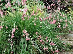 Additional Grasses Plants Grasses Landscaping Perennials