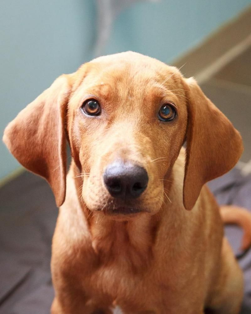 Adopt Captain On Animal Rescue Homeless Dogs Animals