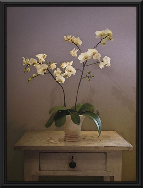 White Flower Paintings This Is An Oil Painting Portrait Of A The