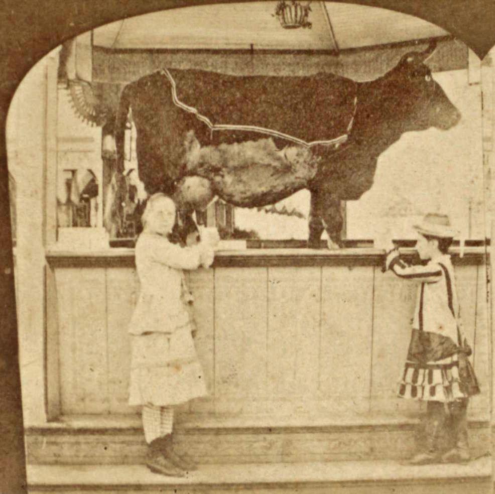 Coney Island Cow Age
