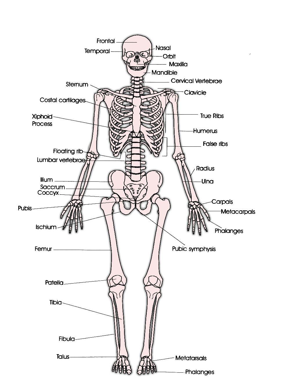 Anatomy of faith