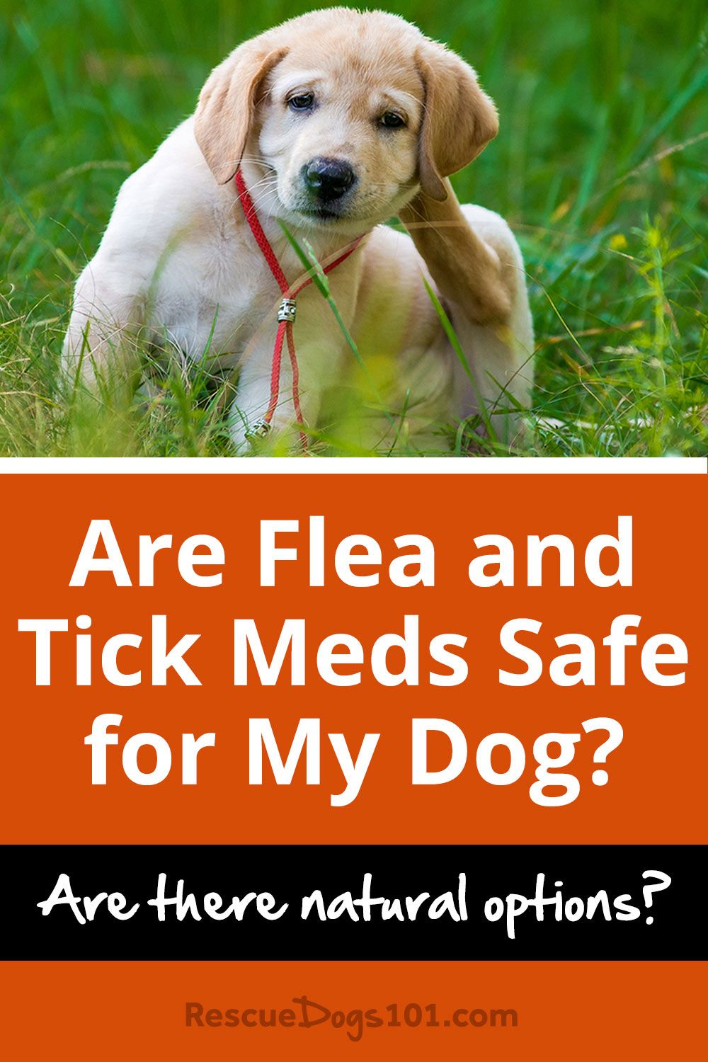 Natural tick and flea prevention for dogs flea tick