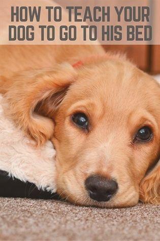 Dog Training Des Moines Dog Training Malinois Dog Training