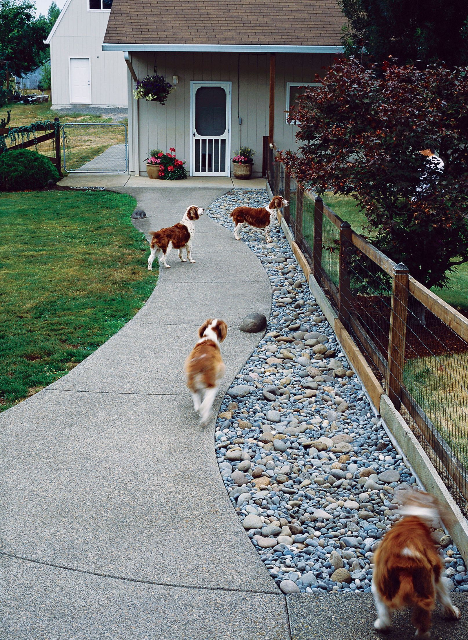 Backyard Ideas for Dogs   Dog friendly backyard, Dog ...