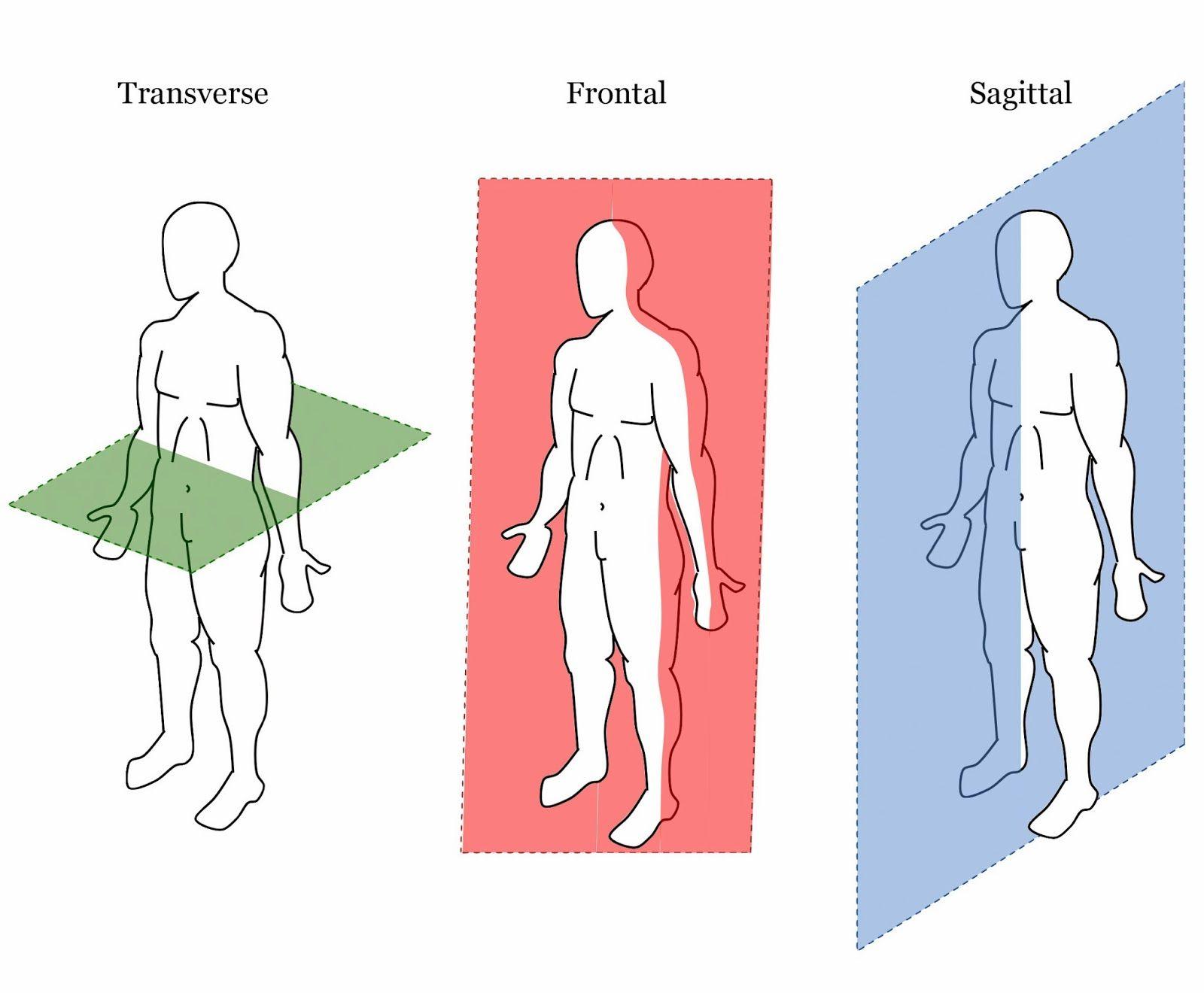 Resultado de imagen de ejes del cuerpo humano | AUXILIAR DE ...
