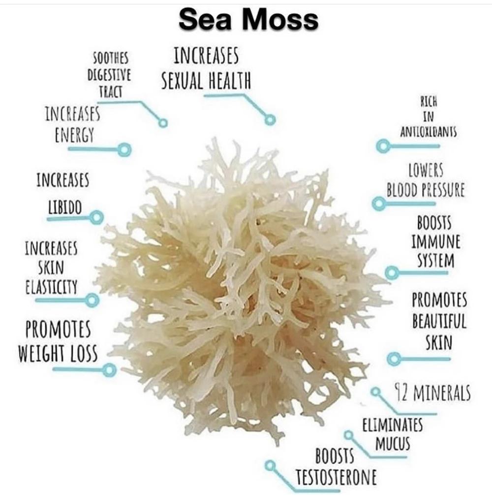 Sea Moss Healthy Sea Moss Seamoss Benefits Moss