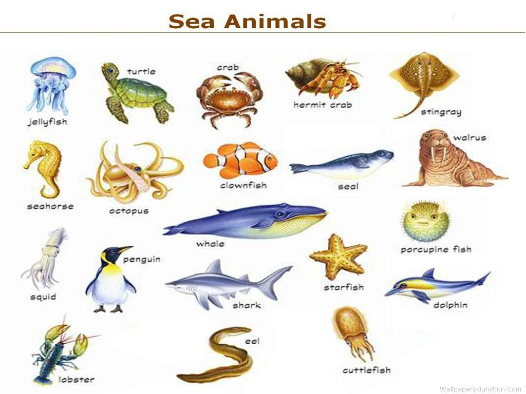 Sea Animals Names Cakepins